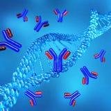 Hélice do ADN chromosome ilustração royalty free