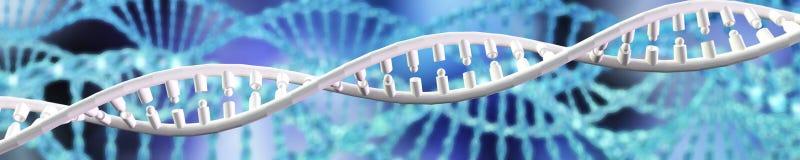 Hélice do ADN chromosome ilustração do vetor