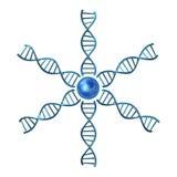 Hélices de la DNA Foto de archivo