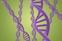 Hélices roxas do ADN em um fundo verde Imagens de Stock Royalty Free