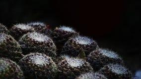 Hémisphères inversés des boules de cactus Image stock