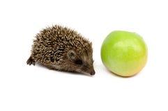 Hérisson avec la pomme verte Photographie stock libre de droits