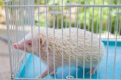 Hérisson dans la cage Image stock