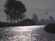 Héron au-dessus de la Norfolk Broads Image libre de droits