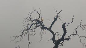 Héron blanc dans l'arbre image stock