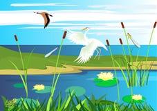 Héron blanc, vol d'oie, lac, gragonflies image libre de droits