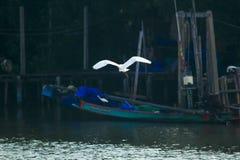Héron blanc volant au-dessus de la surface photo stock