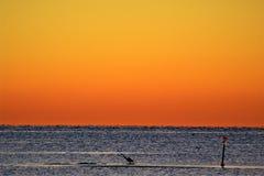 Héron bleu solitaire sur une broche de sable dans Deltaville photo libre de droits