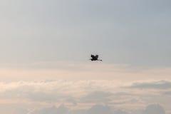 Héron contre le beau ciel Image stock