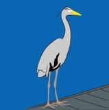 Héron de bleu grand Photo libre de droits