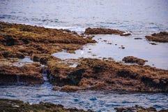 Héron de grand blanc marchant dans l'eau parmi des pierres dans Ténérife, Espagne Photo stock