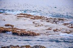 Héron de grand blanc marchant dans l'eau parmi des pierres dans Ténérife, Espagne Photos stock