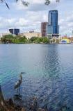 Héron de grand bleu, gratte-ciel et amphithéâtre, au lac Eola, Images stock
