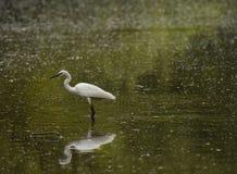 Héron se tenant sur le lac Photographie stock