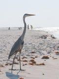 Héron sur la plage menacée par pétrole Photos libres de droits
