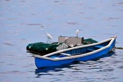 Hérons de bétail sur le bateau, Mumbai photo stock