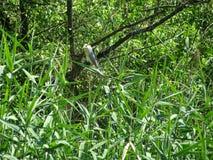 Hérons sur l'arbre Image stock