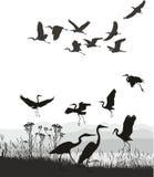 Hérons sur les rivages du lac Photos libres de droits