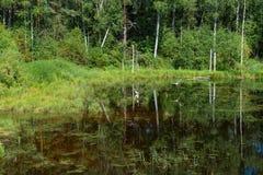 Hérons sur un lac de forêt Photographie stock