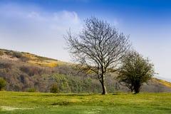 Hésitation en bas de Somerset Photographie stock libre de droits