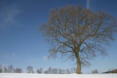 Hêtre dans la neige photographie stock libre de droits