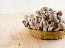 Hêtre de Brown, champignons de shimeji de Buna Photographie stock