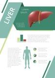 Hígado infographic interno de los órganos humanos Imagenes de archivo