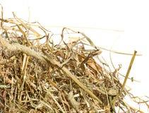 Hö för torrt gräs Royaltyfri Fotografi