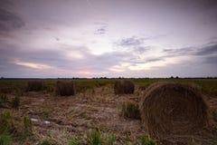 Hö rullar på risfältfältet Arkivfoto