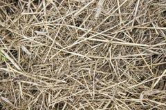 Hö - torrt gräs, som en bakgrund Royaltyfri Foto