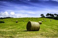 Höbaler i ett grönt fält under blå himmel royaltyfri fotografi