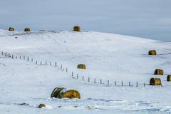 Höbaler i ett snöig fält, cowboy Trail, Alberta, Kanada Royaltyfri Bild