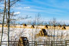 Höbaler i ett snöig fält, cowboy Trail, Alberta, Kanada royaltyfri fotografi