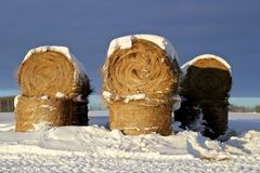 Höbaler med snö Arkivbilder