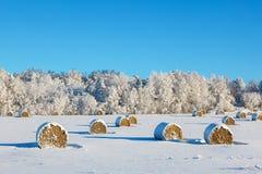Höbaler på ett vinterfält Royaltyfri Fotografi
