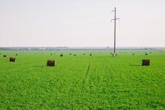 Höbuntar på grönt fält Arkivfoto