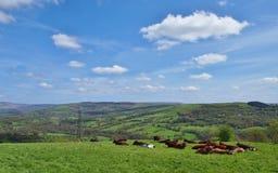 Höchst- Bezirk Nord-England Stockbilder