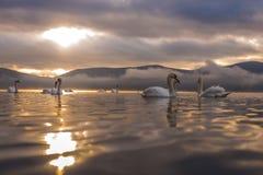 Höckerschwangefühl romantisch und Liebe am See Yamanaka mit Mt stockfotografie