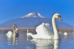 Höckerschwangefühl romantisch und Liebe am See Yamanaka mit Mt lizenzfreie stockbilder