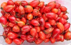 höfter höfter steg Nya organiska röda roshöfter i plast- bunke royaltyfri bild