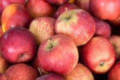 Hög av äpplefrukt Arkivfoton