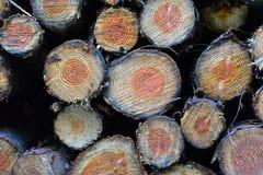 Hög av åtskilligt som sågas av träträdjournaler med årstillväxtcirklar arkivfoto