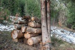 Hög av av vedträt i skogen Arkivbild