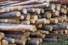 Hög av avverkade trädstammar Arkivbild