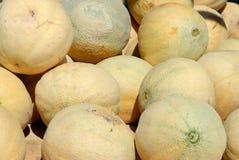 Hög av cantaloupmelon eller muskmelons Royaltyfria Bilder