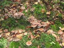 Hög av champinjoner i gräset Royaltyfri Fotografi
