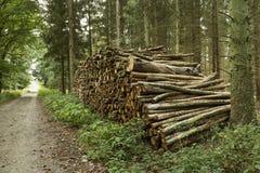 Hög av cutted stammar i skogen Arkivbilder