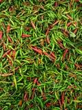 Hög av den kryddiga chili royaltyfri bild