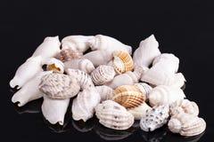 Hög av den olika sorten av små havsskal som isoleras på svart bakgrund Royaltyfria Foton