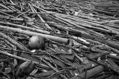 Hög av den torkade bambu, kokosnöten och repet efter flod Grå bild av gammalt trä dekadent trä värdelöst och onyttigt begrepp arkivfoto
